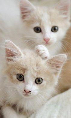 cute twin kittens!