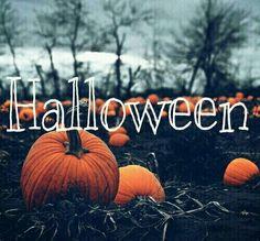 GRANDE ABÓBORA: Halloween