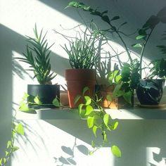 Un coin de verdure chez soi