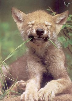 Wolf Pup- say cheese!