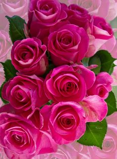 ⚘ to your day⚘ 🌹💕🌹💕 💝💖 🌸💞الْشَّوْق وَ الْبَسْمَه… Beautiful Rose Flowers, Love Rose, All Flowers, Flowers Nature, Amazing Flowers, My Flower, Good Morning Flowers, Flower Pictures, Flower Wallpaper