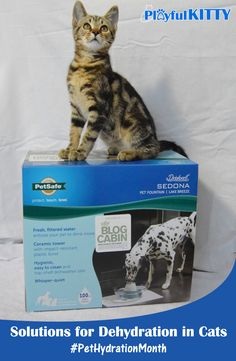 Could a pet fountain help your cat? Learn about proper hydration for cats and enter to win a PetSafe Current Pet Fountain! #PetHydrationMonth #sponsored