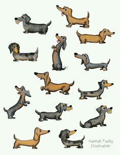 """Outstanding """"dachshund pups"""" information is readily available on our website. Check it out and you wont be sorry you did. Dachshund Funny, Dachshund Art, Daschund, Dachshund Drawing, I Love Dogs, Cute Dogs, Back In The Game, Weenie Dogs, Doggies"""