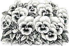 Pansy Flowers Color Coloring pages colouring adult detailed advanced printable Kleuren voor volwassenen coloriage pour adulte anti-stress kleurplaat voor volwassenen Line Art Black and White