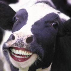 I'm not a CrAzY heifer.....I'm a MAD cow!