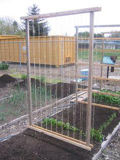 Community Garden Plot #20 - Bean Trellis | Set up one of the… | Flickr