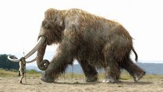 Name:  10KBC_Mammoth_A_01.jpg Views: 7416 Size:  202.5 KB