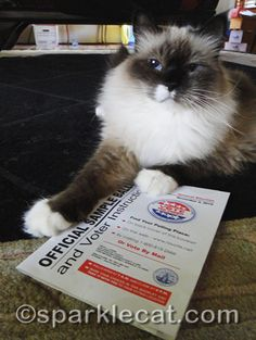 Get out the vote- by any means necessary! If it means cute cat pictures, well, that's what the Internet was made for. Great post on why she's voting.