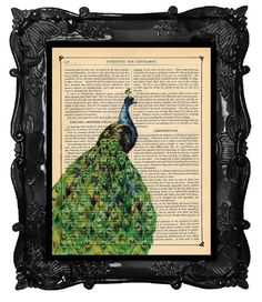 Flowing Peacock feather tail art print - Antique Peacock - Art Print peacock bird art print on a antique book page
