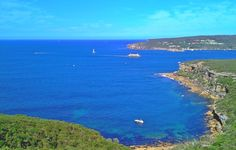 #Sydney, #Australia: Housesitter and Catsitter needed for home near Syndey, NSW, Australia.