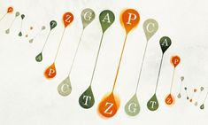 Scientists hope that new genetic letters, created in the lab, will endow DNA with new powers.