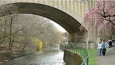 Branch Brook Park, Essex County (Newark), Cherry Blossom Festival, April 7-22. Don't forget to bring your camera!