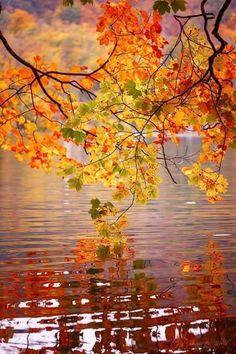 rosiedreams • Autumn wonder