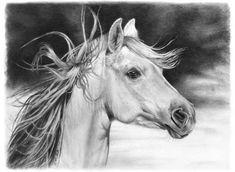 Horse Sketch!