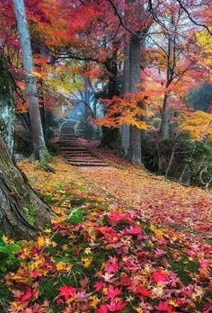 HD wallpaper Cooper Copii: Most beautiful nature wallpaper for everyone Fall Pictures, Nature Pictures, Pretty Pictures, Landscape Photography Tips, Nature Photography, Beautiful World, Beautiful Places, Autumn Scenes, Nature Wallpaper