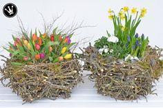 DIY - Nest aus Baumschnittabfällen selber machen. Tolle Idee für eine frühlingshafte Blumendeko