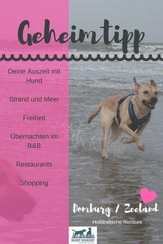 Geheimtipp | Urlaub mit Hund | Nordsee | Holland | hundefreundliche Unterkunft | Domburg | Reisen mit Hund