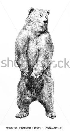 hand drawn bear standing on hind legs, bear sketch illustration isolated on white background