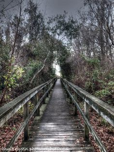 Outer Banks. The Path at Whalehead by annie flynn