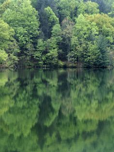 Reflections in Charlottesville Lake, Blue Ridge Mountains, Virginia