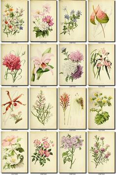 PURPLE2 FLOWERS Collection of 210 vintage images pictures