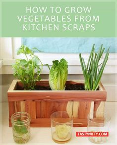 How To Turn Your Vegetable Scraps Into Vegetables Again - Tasty Nifty - Page 2