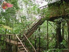 The Tree Houses Hotel is a bed and breakfast in Costa Rica, in the rain forest near Arenal Volcano.