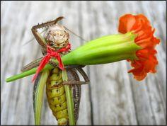 a true gentleman Ностальгическая Photo  (insect, flower)