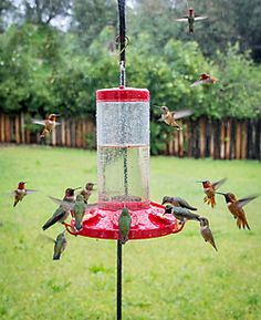 Perky-Pet® The Grand Master Plastic Hummingbird Feeder