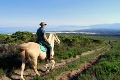 An ultimate way to experience the magnificent landscapes of the Cape is to go horse riding.