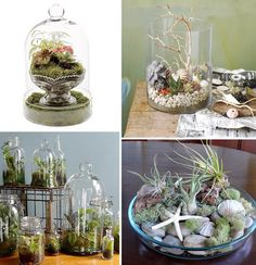 Terraniums! These are fantastic as well!