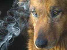 Fumo pode prejudicar animais de estimação