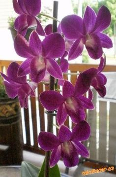 NAŠLA JSEM NA NETU,DRŽÍM SE TOHO A ORCHIDEJKY PROSPÍVAJÍ,NÁVOD S ODKAZEM BYL ADMINY ODMAZÁN TAK SI D... White Orchids, Ikebana, Fungi, Potted Plants, Flora, Illustration Art, Pots, Anna, Gardening