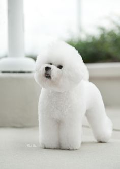 Bichon Frise. Good adaptability for temps, smart, sometimes hard to housebreak, not many health probs. Small and still pretty good with kids. -1                                                                                                                                                      More