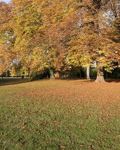 100% #wander #patrimoine #parc #garden #autumn #orange #tree #forest #leaves #nature #courson #explore #leica #leicaq #beauty #arbre #lfi #landscape