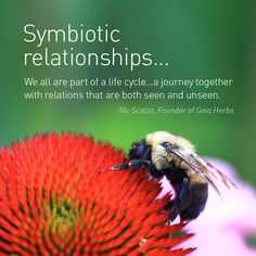 Symbiotic relationships. We are all part of a life cycle ... a journey together with relations that are both seen and unseen.