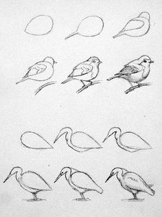 Pencil Drawing Techniques - Learn the easiest ways to draw birds. Step by Step bird drawing tutorial. Drawing Lessons, Drawing Techniques, Drawing Tips, Drawing Sketches, Painting & Drawing, Sketching, Drawing Ideas, Drawing Drawing, Sketches Of Birds