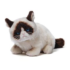 Amazing, how the power of social media can create income for basically anything, like grumpy cat merchandise.