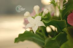 Цветы из полимерной глины.