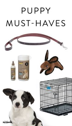 Make sure your puppy has all she needs with this new pet checklist.