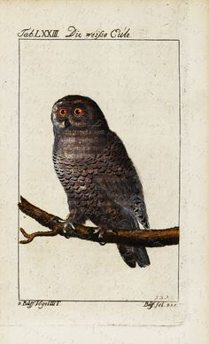 Original Antique Natural History Bird Engraving  by RarePostCards