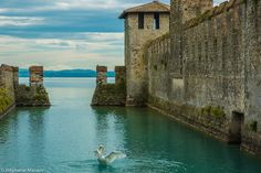 Swan Lake by Stéphanie Masson on 500px - A majestic swan that spreads its wings on Lake Garda near the fortress Rocca Scaligera (Sirmione, Italy).