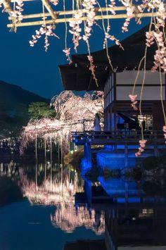 平安神宮 東神苑 紅しだれコンサート/Benishidare Concert at Heianjingu Shrine | Flickr - Photo Sharing!