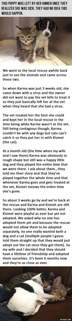 The Story Of A Dog Abandoned By Her Owners As A Puppy Because of Her Sickness.