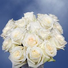 75 Fresh Cut White Roses with a Creamy Yellow Center Long Stem | Mount Everest Roses | Fresh Flowers Express Delivery | Perfect for Birthdays, Anniversary or any occasion. * Visit the image link more details.