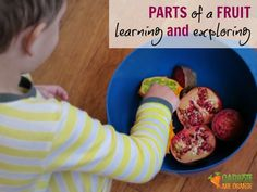 Introduction to Learning Parts of a Fruit