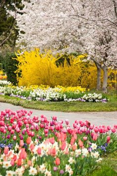 A walk thru a park looking at all these gorgeous flowers would be my HAPPY PLACE!