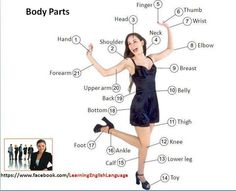 Picture vocab - body parts