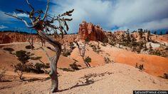 Desert Tree Shadow - http://wallsfield.com/desert-tree-shadow-hd-wallpapers/