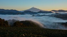 Mt.Fuji and sea of clouds by peaceful-jp-scenery (busy) Mt.Fuji over the tea farm 高山茶畑からの富士山  from my hometown After the rain misty Fuji can be seen probability in this autumn.  珍しく地元ネタです この時期雨上がりの朝には高確率で霧が現れます 雲海の富士山として人気のスポットです  [16:9 trimming] Shimizu-ku Shizuoka city Japan http://flic.kr/p/Pnyvqd